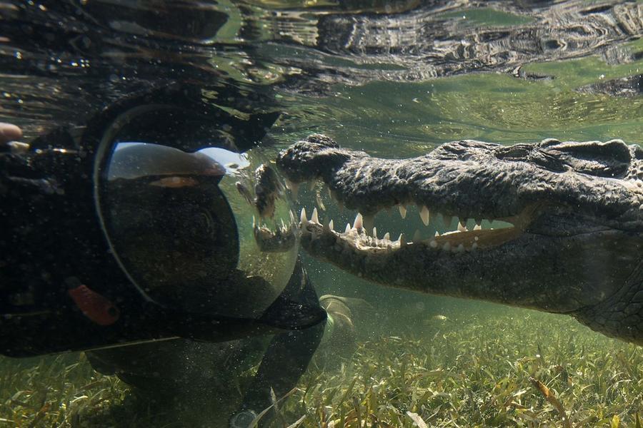 krokodilami-progulka-podvodnaya-eto-interesno-poznavatelno-kartinki_9848158495