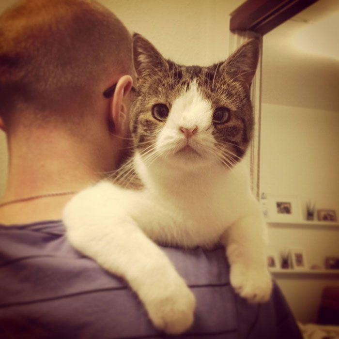monty_cat_02