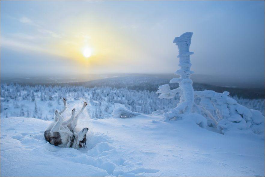 laplandiya-zimnyaya-krasivye-fotografii-neobychnye-fotografii_1662126451