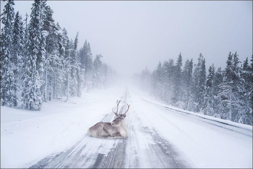 laplandiya-zimnyaya-krasivye-fotografii-neobychnye-fotografii_66100189874