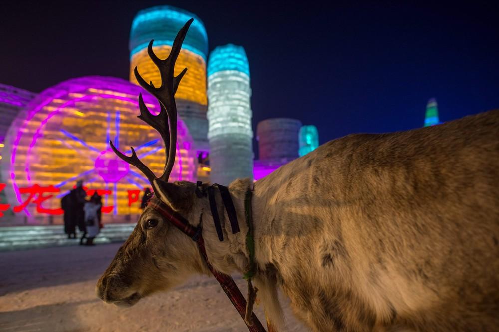 snega-lda-festival-krasivye-fotografii-neobychnye-fotografii_516417616
