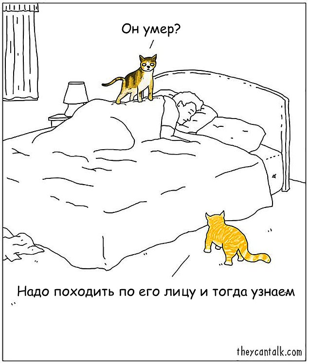 komikse-zabavnom-kotom-komiksy-kartinki-komiksy_9728846422